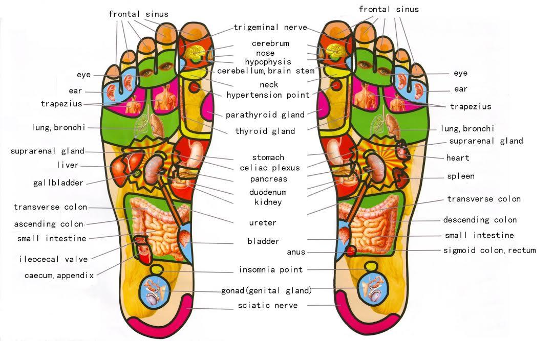 foot-reflexologie